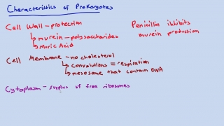 Cytoplasm, DNA, Binary Fission, and Flagella of Prokaryotes