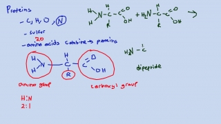 Dipeptides and Polypeptides