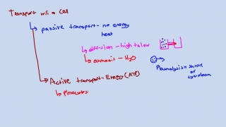 Active Transport Within a Cell