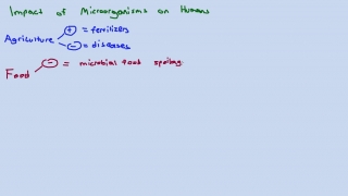 Impact of Microorganisms on Humans