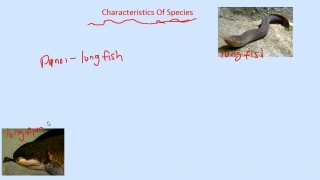 Characteristics of Species-Fish