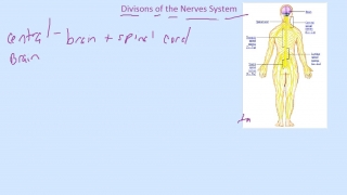 Divisions of Central Nerves System- Part 1