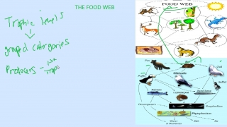 Introduction to the Food Web
