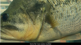 Fish Skin - Aquatic Science with Dr. Rudy Rosen 4.7