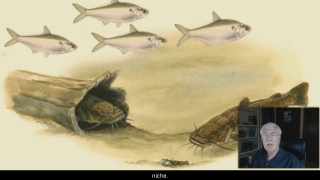 Niche - Aquatic Science with Dr. Rudy Rosen 5.4