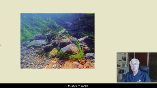 Stream Ecosystems - Aquatic Science with Dr. Rudy Rosen 8.5
