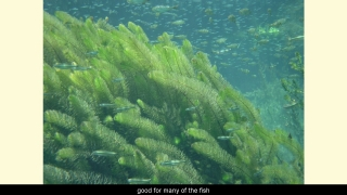 Lake Ecosystems - Aquatic Science with Dr. Rudy Rosen 9.6