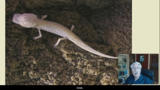 Spring Ecosystems - Aquatic Science with Dr. Rudy Rosen 7.6
