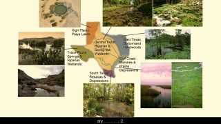 Wetland Types - Aquatic Science with Dr. Rudy Rosen 10.4